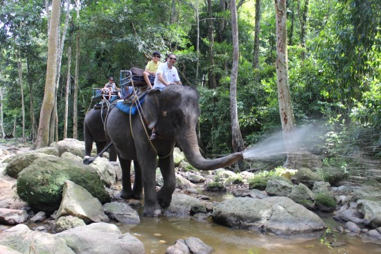 Elephant Ride - Koh Samui
